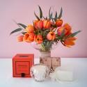 Tulip Posie Fragrance Pack