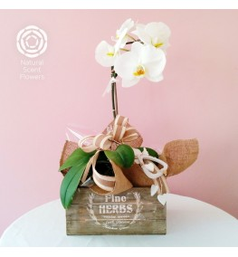Phalaenopsis Pot with Angel Decoration in Wooden Planter
