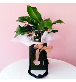 Potted Peace Lily in a Box