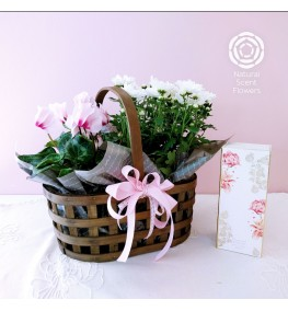Double Plant Basket with MOR Diffuser Gift Set