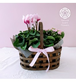 Double Plant Basket Gift Set
