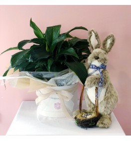Large Peace Lily Plant wrapped plus Fluffy Easter Bunny.