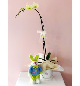 Phalaenopsis and Easter Bunny.